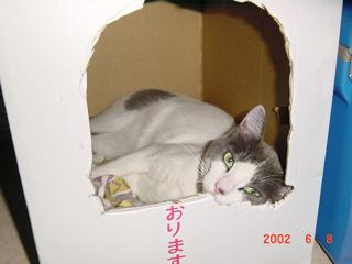 Haishi01.jpg