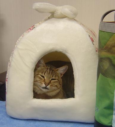 her-house2.JPG