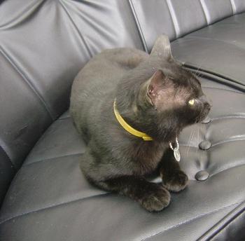 c-sofa1