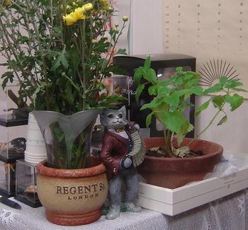 catplanter