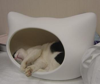 kitty-h-BOSS1.JPG