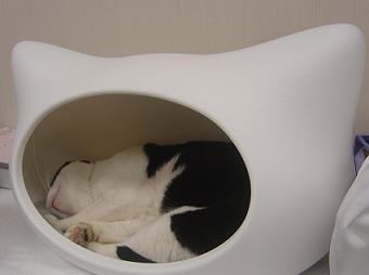 kitty-h-BOSS2.JPG
