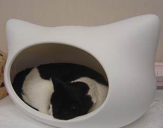 kitty-h-BOSS3.JPG