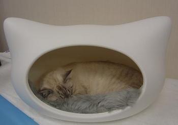 kitty-h-vitton2.JPG