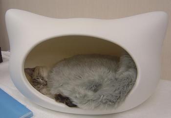 kitty-h-vitton3.JPG