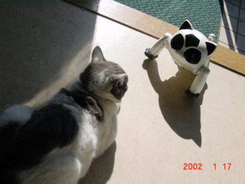猫とネコロボ
