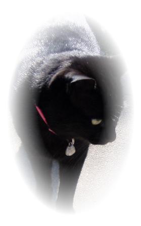 昔いた猫:クロ