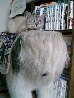 犬の上の猫(=^▽^=)