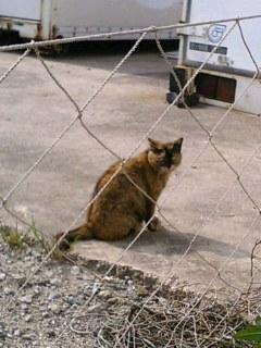 須磨で出会った猫