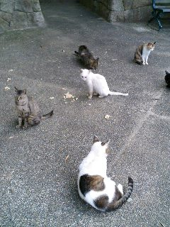 岸和田SAの猫と待ちくたびれた猫