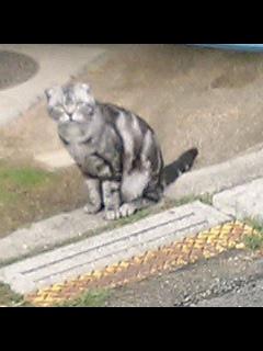 別宅の近くの猫 スコちゃん