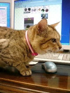 診察室の猫