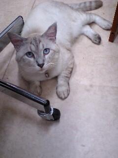 やっぱり美猫