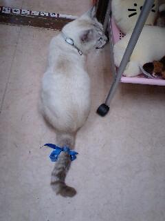 しっぽリボン猫追加