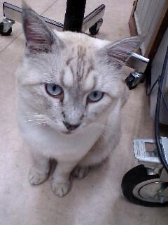 ヴィトンくんの青い眼