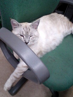 院長の椅子