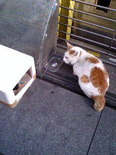 銀座の生き招き猫