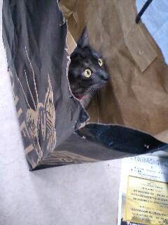 ダヤンになりたい猫たち