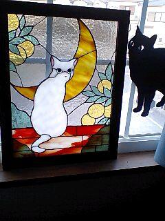 toto猫ちゃん 横浜3 ルナちゃん