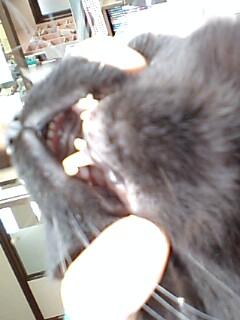 牙じゃなくて