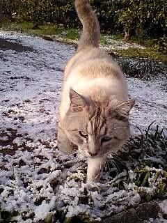 雪でした♪