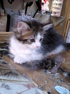 けいと屋ニコルさんちの猫