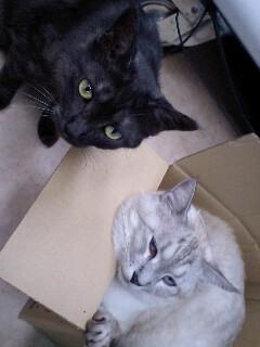 箱入り息子を脅かす