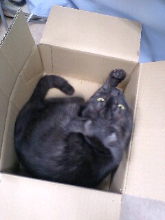 箱入りミュウミュウ