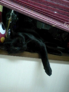 黒猫は出窓がお好き