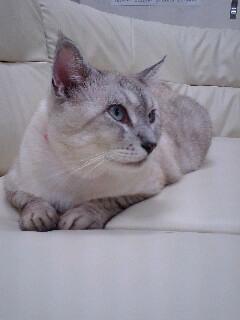白いソファに