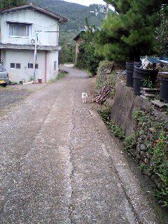 ヴィトン君と散歩