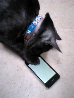 愛ふぉ〜ん で 遊ぶネコ