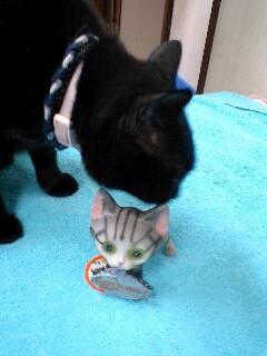 ダイソーにいた猫