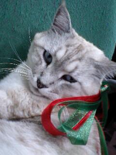 メリークリスマス ヴィトン