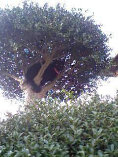 木の上のピンキーたん