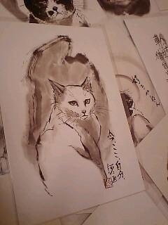 大阪の猫やねん