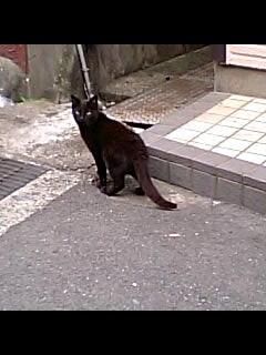 箕島でみかけた猫