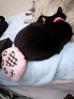 猫の足クッションと