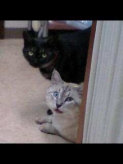 猫 は 見た!