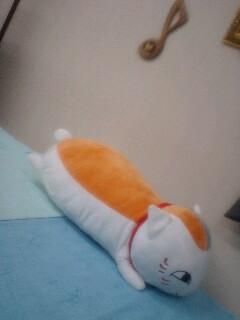 にゃんこ先生抱き枕