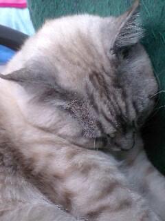 眠れるヴィトン院長