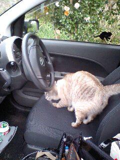 運転するにゃ〜