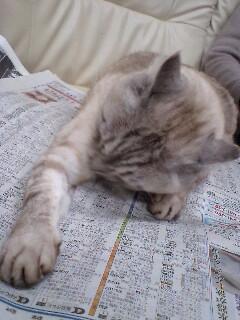 新聞読んでる?