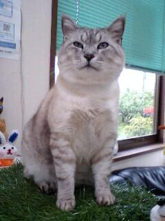 猫が生える芝生