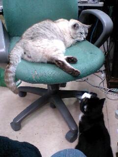 危うし院長の椅子