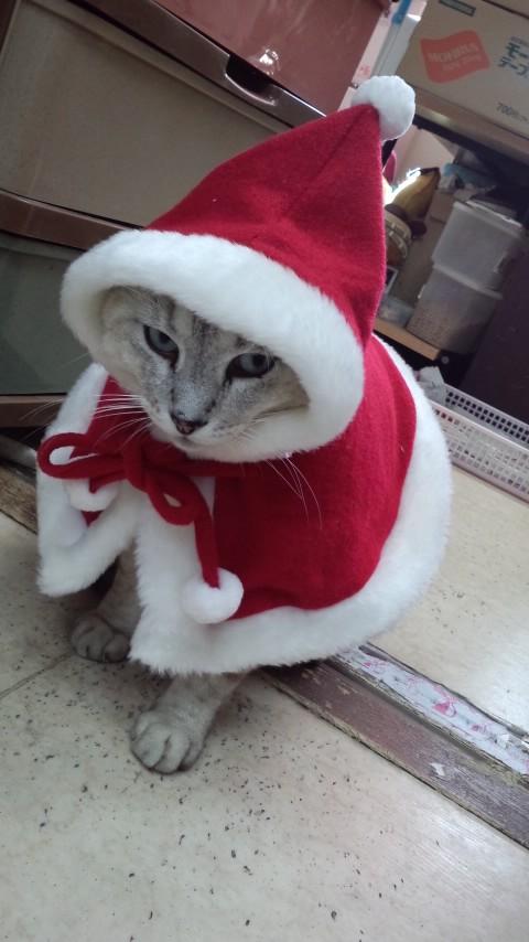 もうすぐ?クリスマス