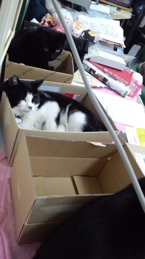 箱入りな猫々