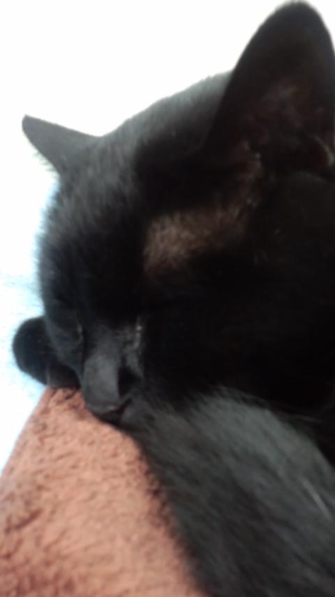 猫タオルハンカチ