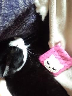 猫コインパース