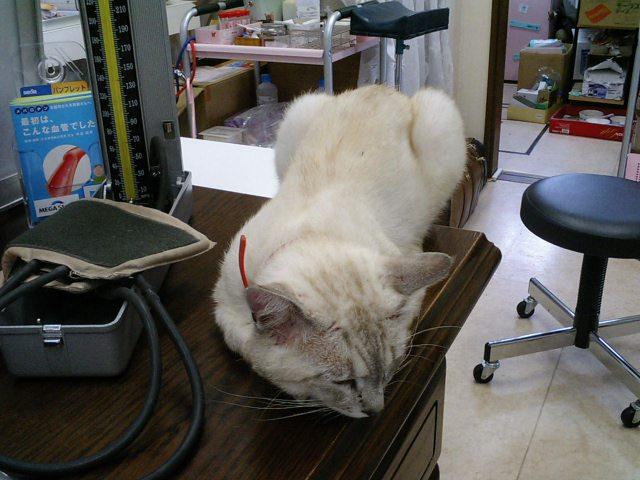 本日の血圧の計測台